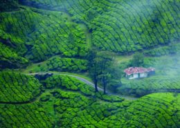 honeymoon packages to kerala munnar