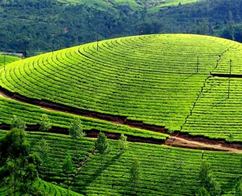 kerala honeymoon packages munnar
